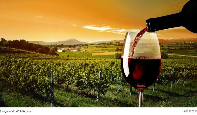 Crashkurs Wein 13: Die 10 Regeln der perfekten Weinverkostung