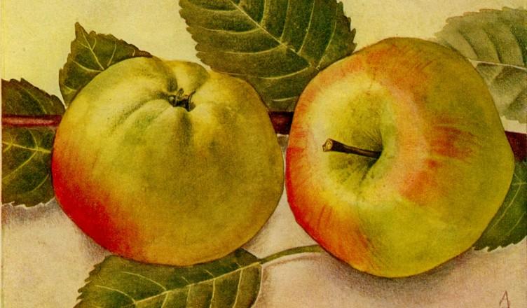 Wissenswertes: Der Apfel der Könige...