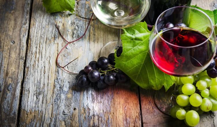 Crashkurs Wein 4: Was braucht der Rebstock...