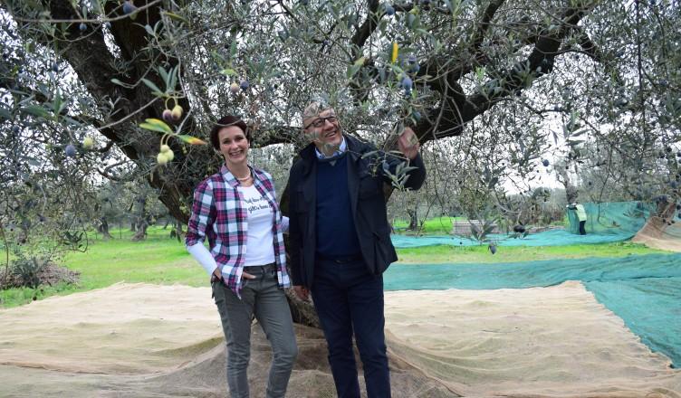 Bildergalerie: Olivenernte in den Abruzzen bei Peppino Ursini...