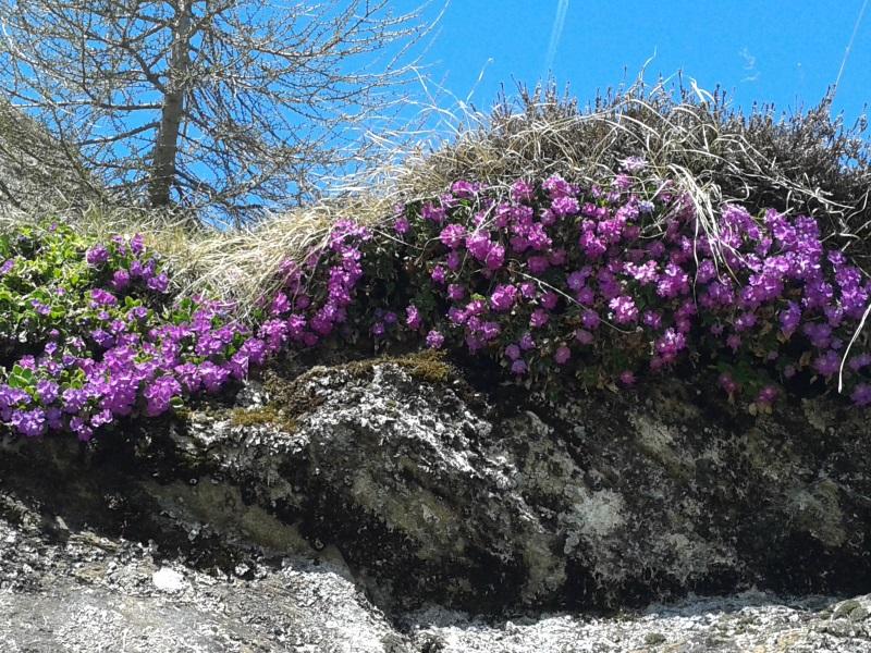 Darum lieben wir Südtirol: Fotos von unseren Gästen und Bloglesern