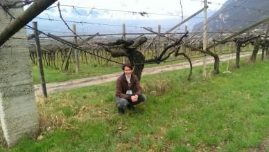 Video:   Südtiroler Wein und seine Kellereien