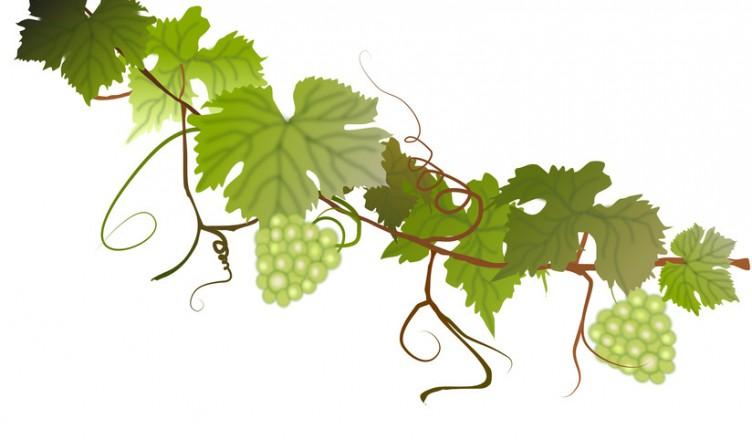 Crashkurs Wein 3: Was braucht der Rebstock...