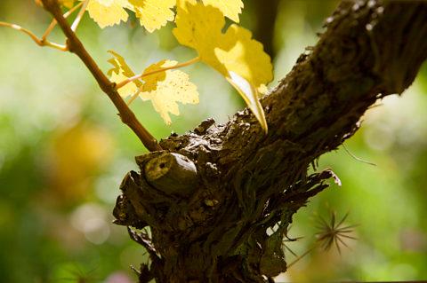 Crashkurs Wein 2: Ganz am Anfang steht ein Mensch mit einer Vision...