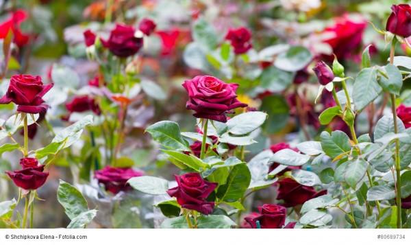 Führung durch Schennas schönste Privatgärten
