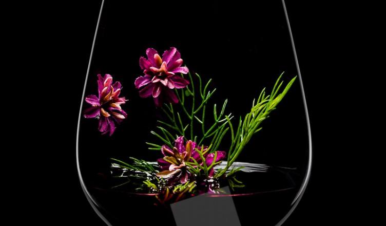 Crashkurs Wein 22: Die Rebsorten
