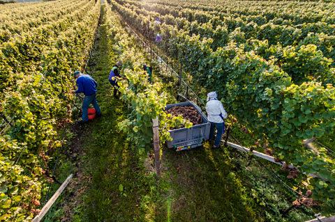 Crashkurs Wein 5: Der Winzer...