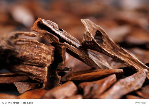 Zitat: Schokolade ist...