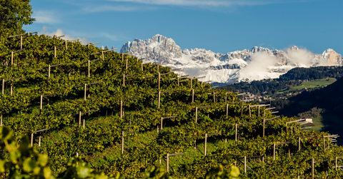 Crashkurs Wein 7: Die Berge und der Weinberg...