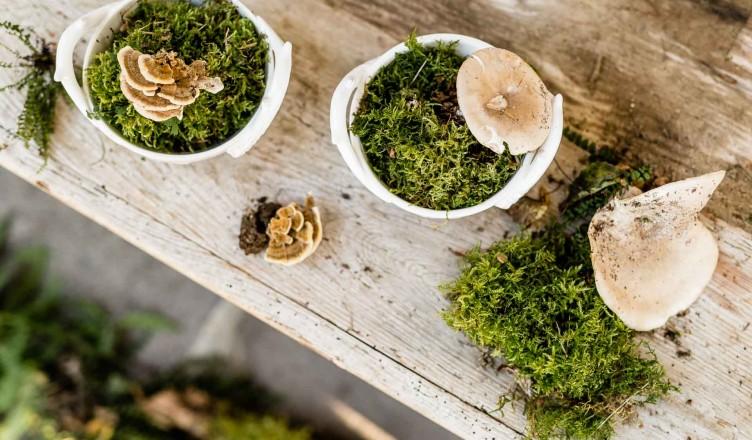 Wissenswertes über Pilze: Wer kann da widerstehen?